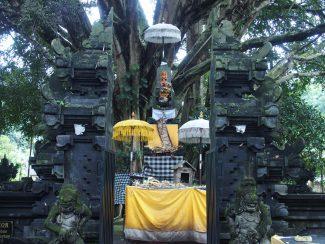 Individuele rondreis Bali Tirta Empul