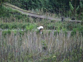 Rondreis Bali met bezoek Sidemen