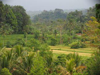 Zicht op de rijstterassen van Sidemen op Bali