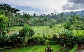 Indonesie-rondreis-Bali-Sidemen