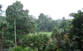 Rondreis-Java-Bogor
