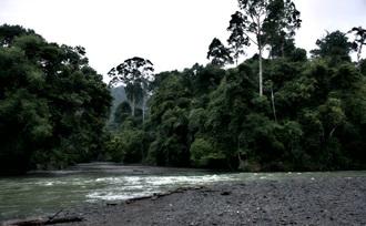 Rondreis-actief-Sumatra-Tangkahan