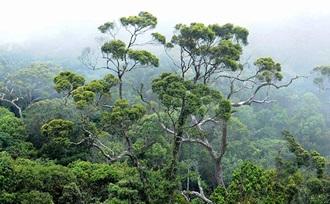 individueel - rondreis - Sri Lanka - Sinharaja - regenwoud