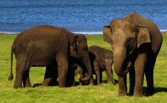 rondreis - Sri Lanka - Udawalawe