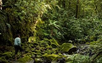 trekking Kerinci Seblat - actieve - reis - Sumatra