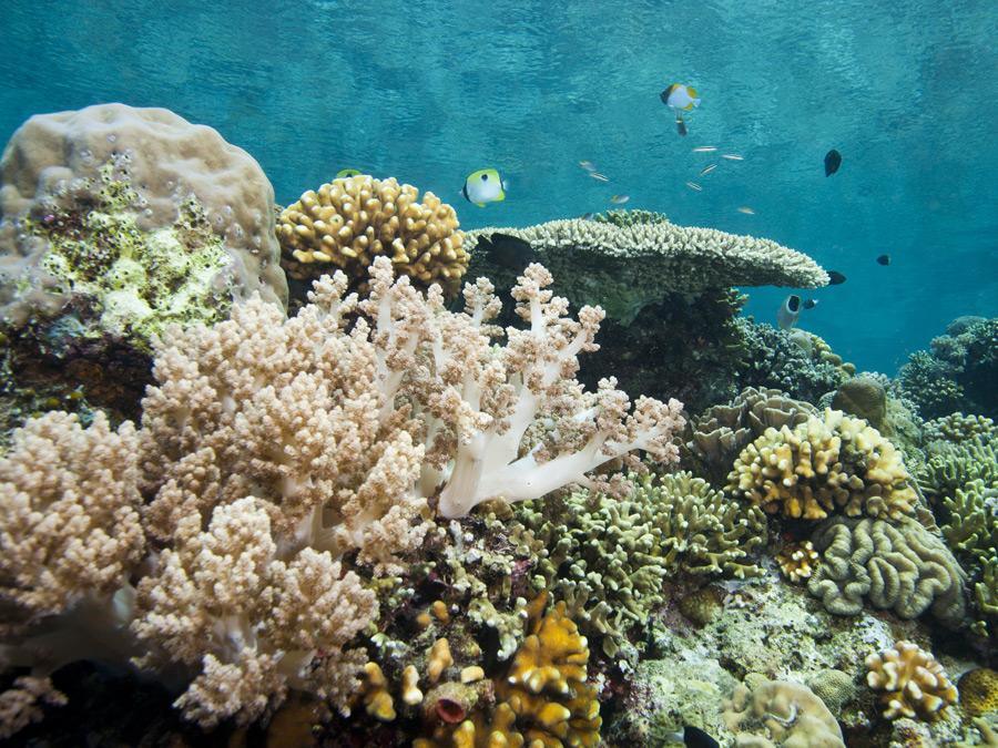 Bunaken Sulawesi – vervolg virtuele rondreis