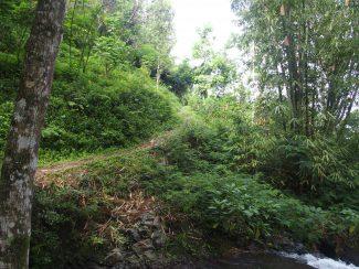 Prive rondreis op Bali met trekking Munduk