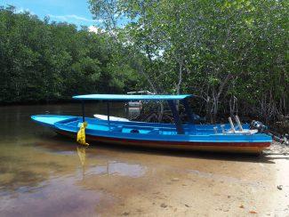 Mangrove Lembongan bij Bali
