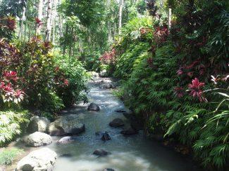 Advies op maat rondreis Java met plantage tour