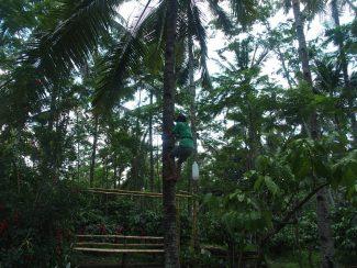 Persoonlijk advies individuele rondreis Java
