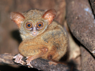 Tangkoko nationale park op Sulawesi, bezoek dit park tijdens uw rondreis door Indonesië