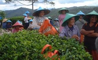 Theeplantage bezoeken op Sumatra