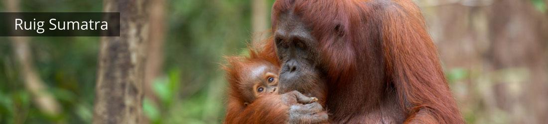 Vakantie op Sumatra, tips