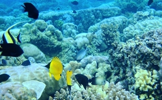 Advies-op-maat-rondreis-Sulawesi-Bunaken