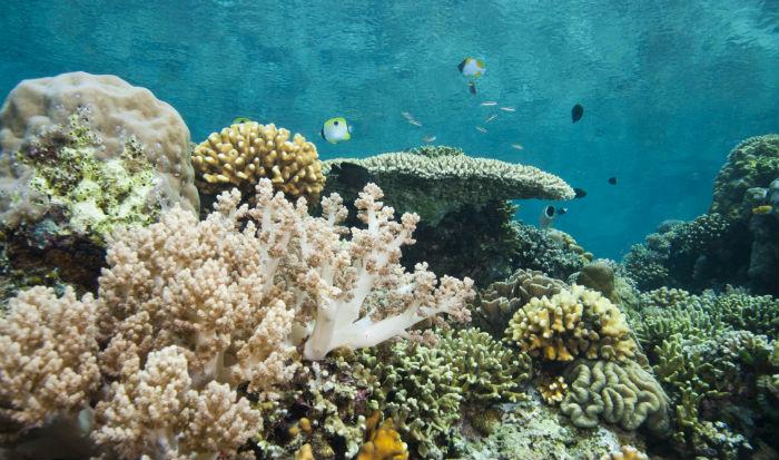Diepzeeduiken op Sulawesi. Combineer dit met een rondreis door Indonesië!