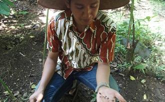 plantage-tour-culinaire-reis-Kalibaru-Java