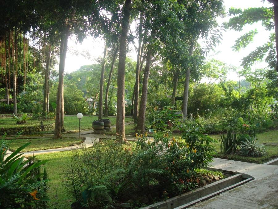 Eco lodge Bukit Lawang
