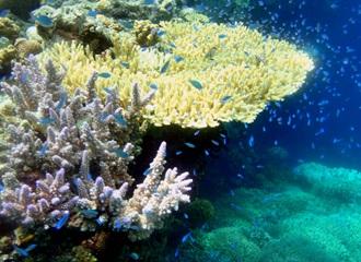 huwelijksreis-Bali-Menjangan-snorkelen-duiken