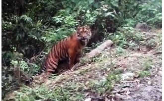 Rondreis - Indonesie - Sumatra - actief - Kerinci Seblat