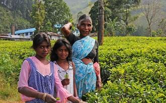 advies op maat - Sri Lanka - Ella