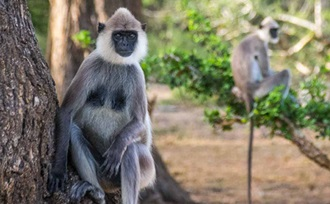 persoonlijk - advies - rondreis - Sri Lanka - natuurlijk - Yala