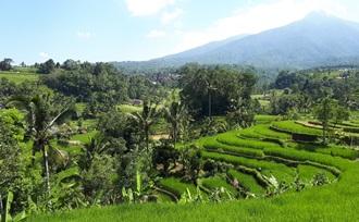 Reisadvies op maat voor een gezinsvakantie, naar Indonesië