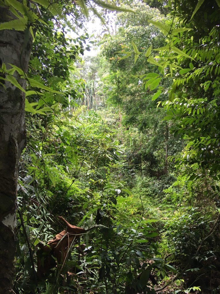 Trekking Gunung Leuser nationaal park Sumatra
