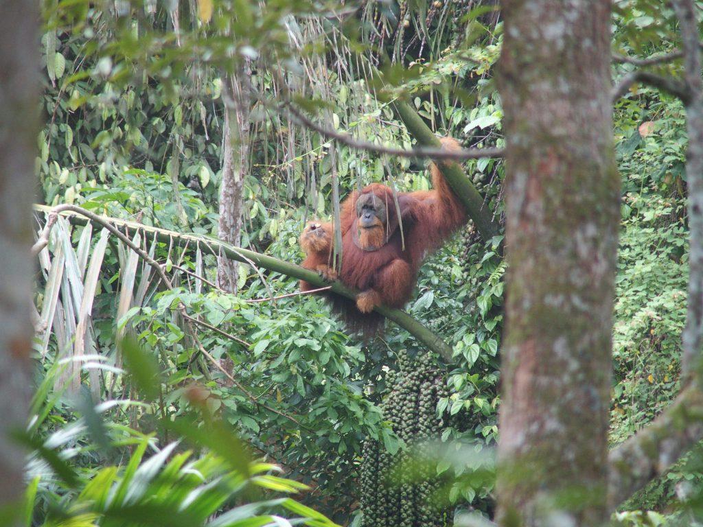 Persoonlijke aandacht voor organisatie van uw droomreis naar Sumatra door Indonesie Regisseur