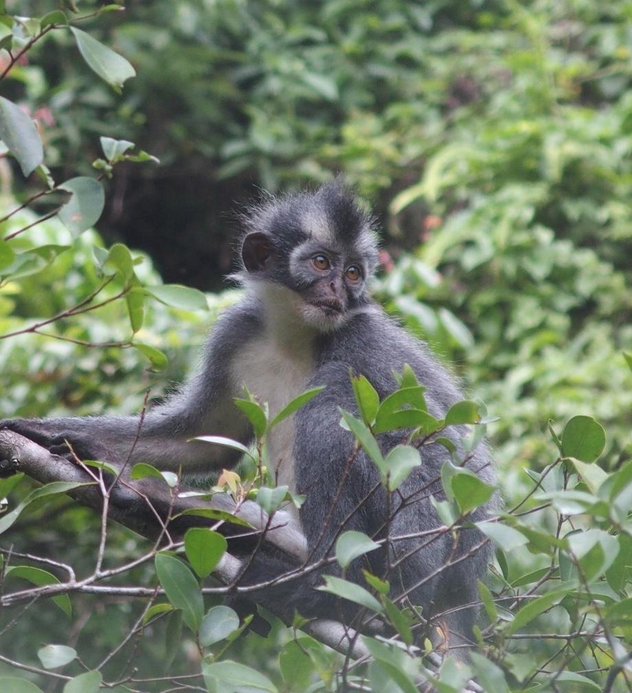 Alle organisatie uit handen tijdens trekking Gunung Leuser Sumatra