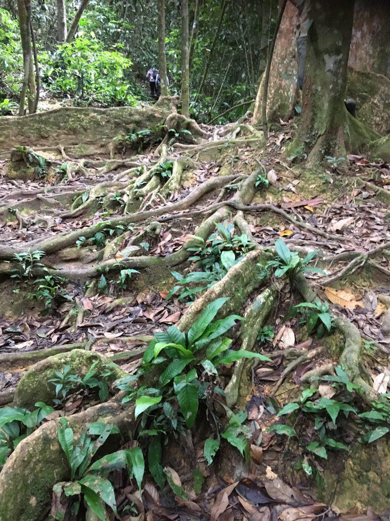 Persoonlijk advies over gezinsvakantie Sumatra